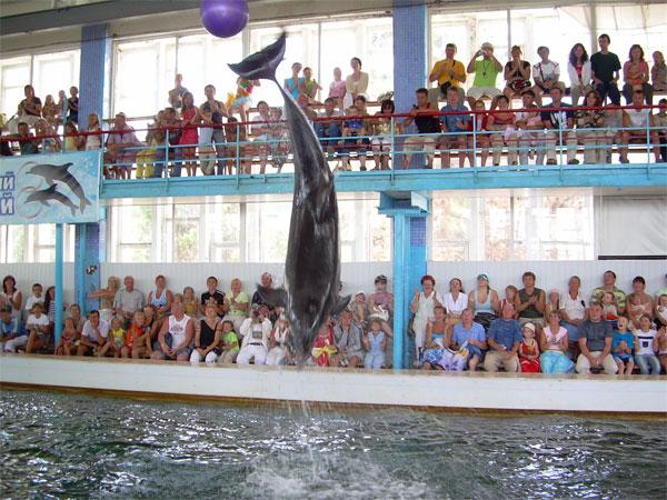 Коктебель дельфинарий