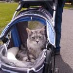 В Коктебеле младенца задушил дворовой кот