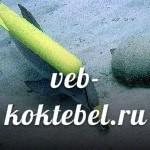 В Крыму в открытое море сбежали боевые дельфины
