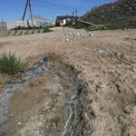 Экологи Крыма на бессрочном карантине